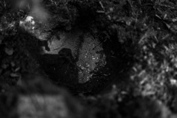 RX1RII, Zeiss Sonnar T* 35mm f2, grzybnia