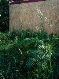 Krajobraz miejski jako interwencja wobec skazenia srodowiska